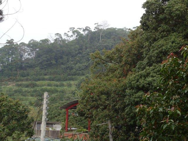 飛鳳山 (169).JPG