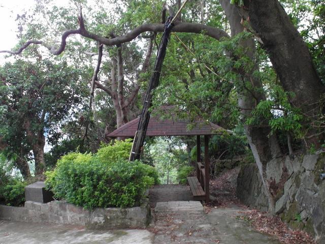法雨寺步道 (93).JPG
