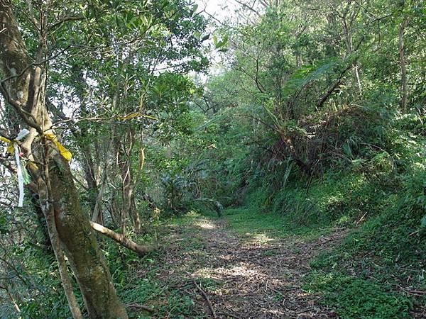 紫微聖母環山步道 (35).JPG