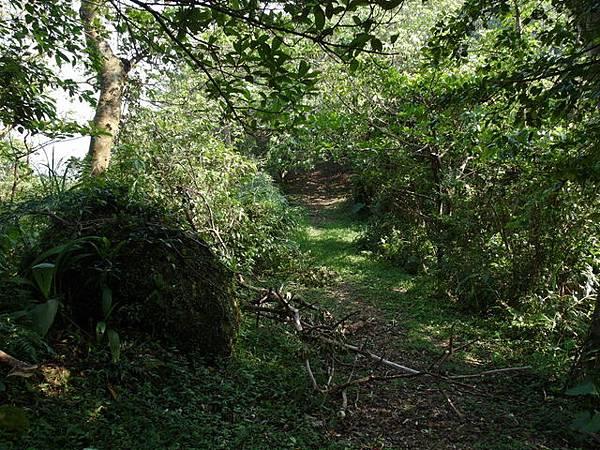 紫微聖母環山步道 (34).JPG