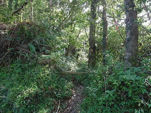 紫微聖母環山步道 (36).JPG