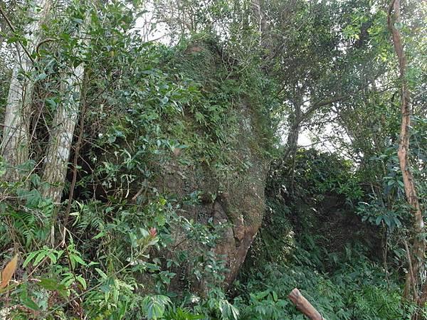 紫微聖母環山步道 (42).JPG