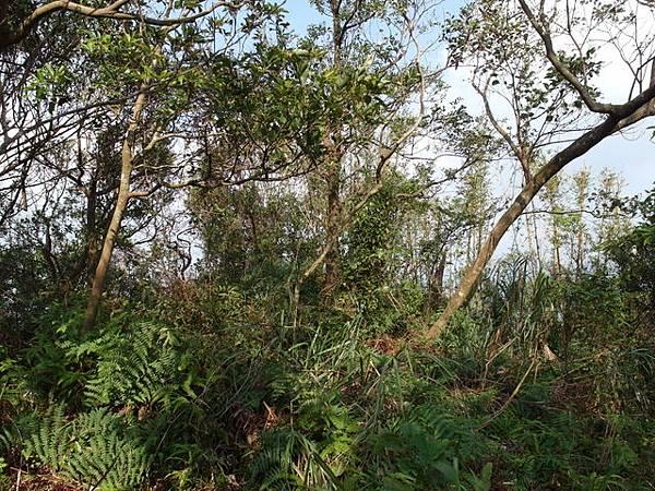 紫微聖母環山步道 (44).JPG