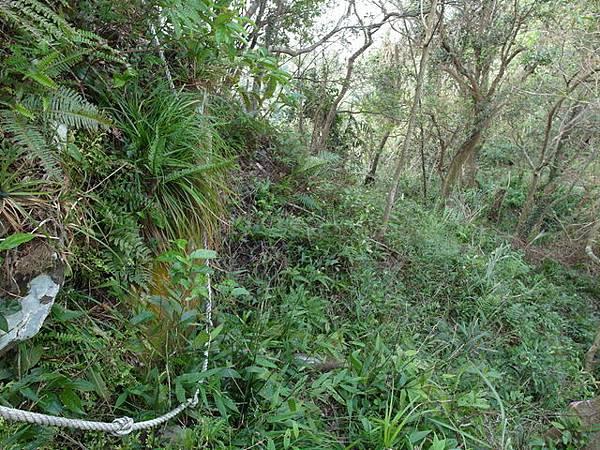 紫微聖母環山步道 (45).JPG