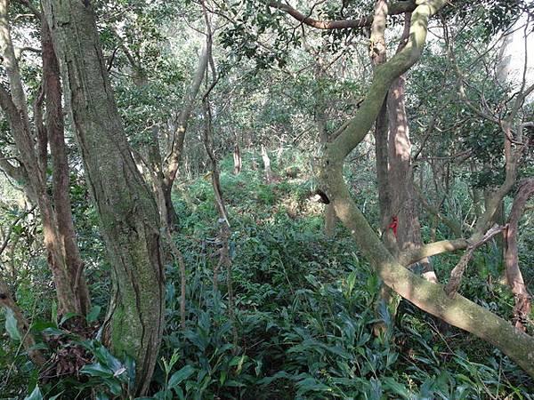 紫微聖母環山步道 (47).JPG