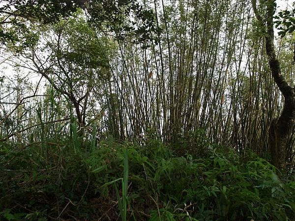 紫微聖母環山步道 (48).JPG
