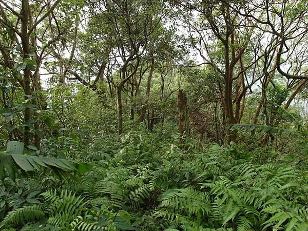 紫微聖母環山步道 (55).JPG