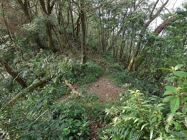 紫微聖母環山步道 (56).JPG