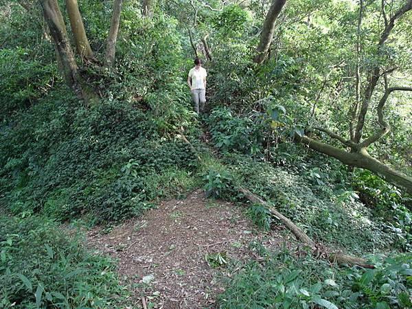 紫微聖母環山步道 (57).JPG