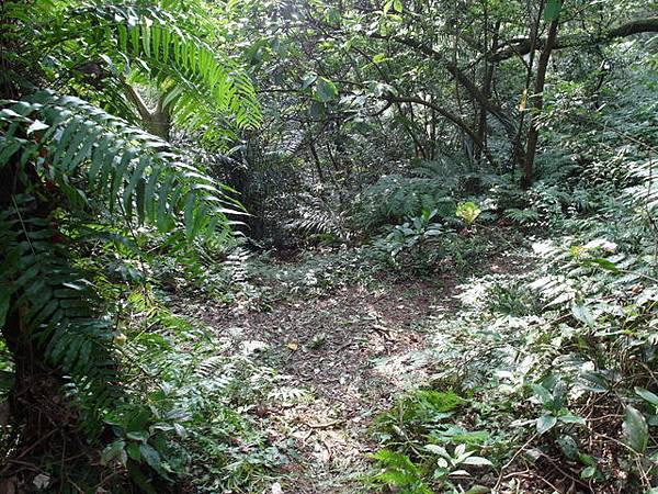 紫微聖母環山步道 (59).JPG
