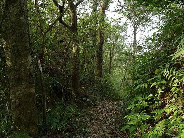 紫微聖母環山步道 (60).JPG