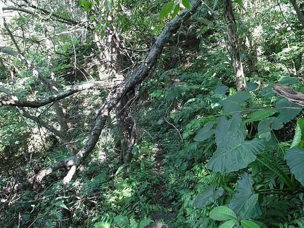 紫微聖母環山步道 (121).JPG