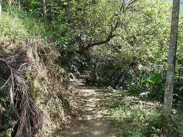 紫微聖母環山步道 (134).JPG