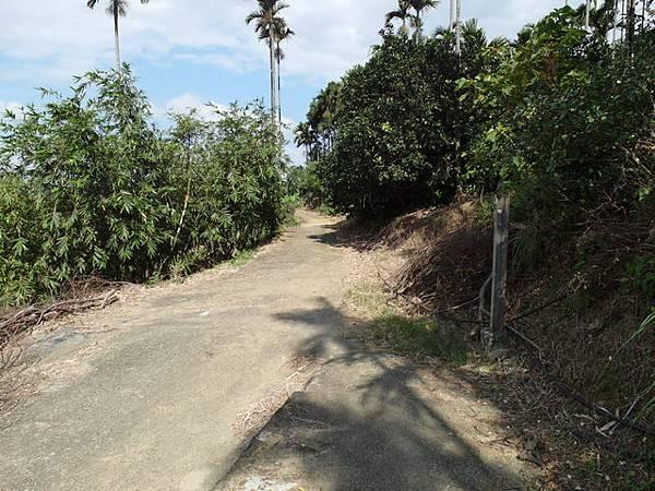 紫微聖母環山步道 (135).JPG