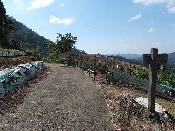 紫微聖母環山步道 (136).JPG