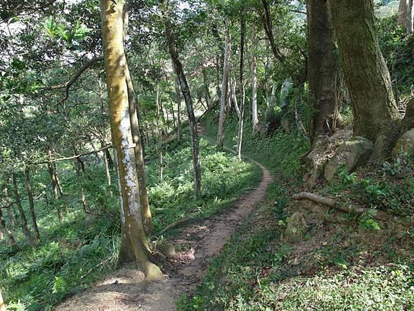 紫微聖母環山步道 (139).JPG