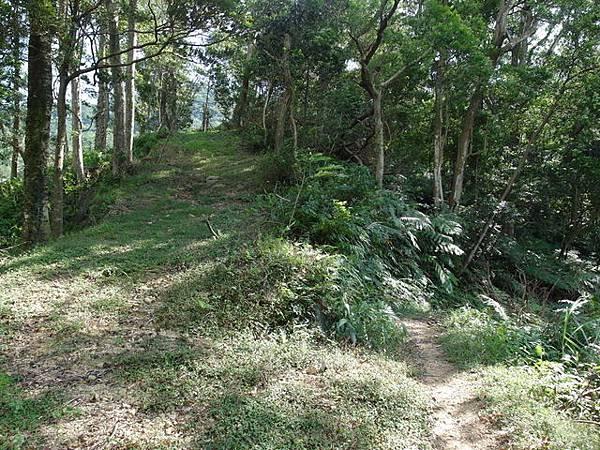 紫微聖母環山步道 (140).JPG
