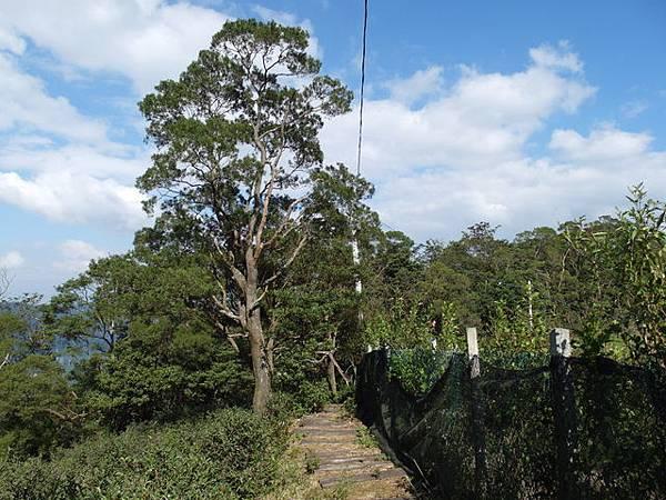 紫微聖母環山步道 (164).JPG