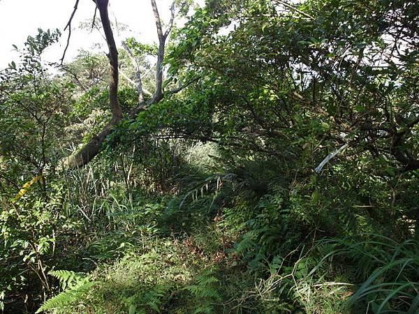 紫微聖母環山步道 (168).JPG