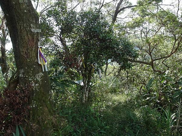 紫微聖母環山步道 (174).JPG
