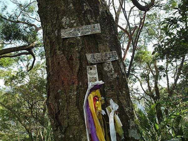 紫微聖母環山步道 (173).JPG