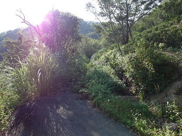 紫微聖母環山步道 (190).JPG