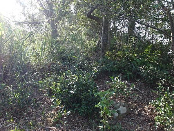 紫微聖母環山步道 (195).JPG