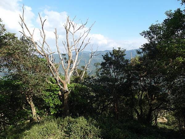 紫微聖母環山步道 (194).JPG