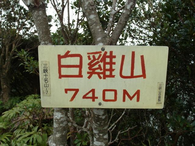 白雞山、雞罩山 (50).JPG