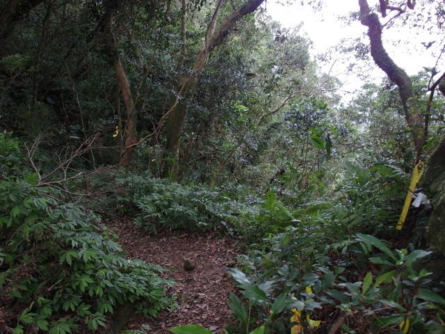 白雞山、雞罩山 (126).JPG