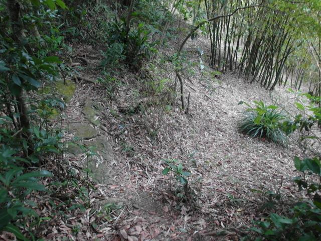 白雞山、雞罩山 (135).JPG