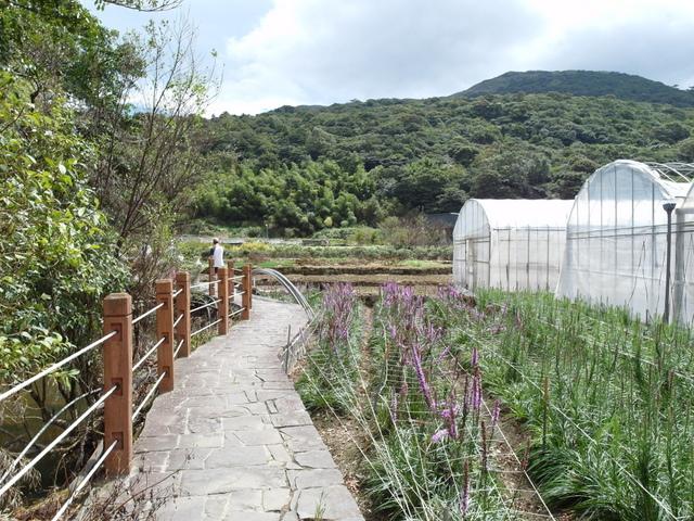 竹子湖步道  (30).JPG