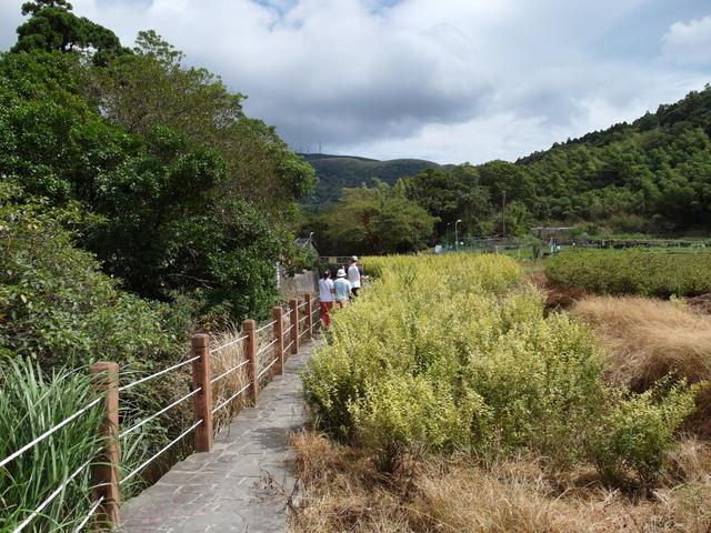 竹子湖步道  (31).JPG