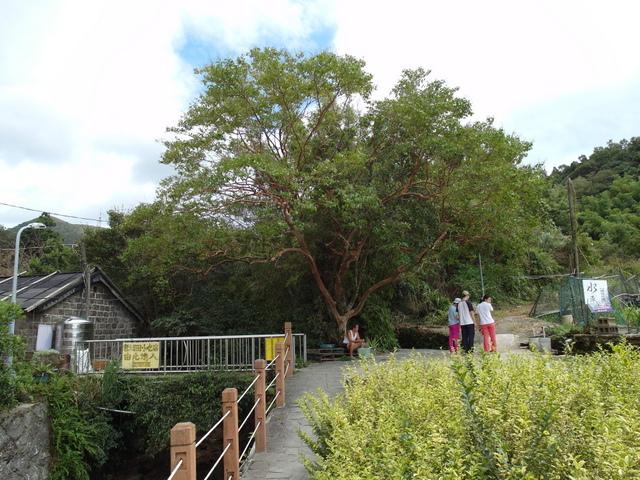 竹子湖步道  (33).JPG