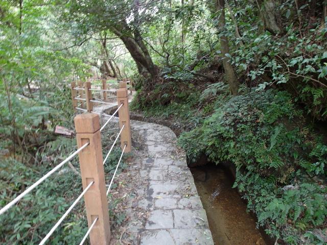 竹子湖步道  (34).JPG