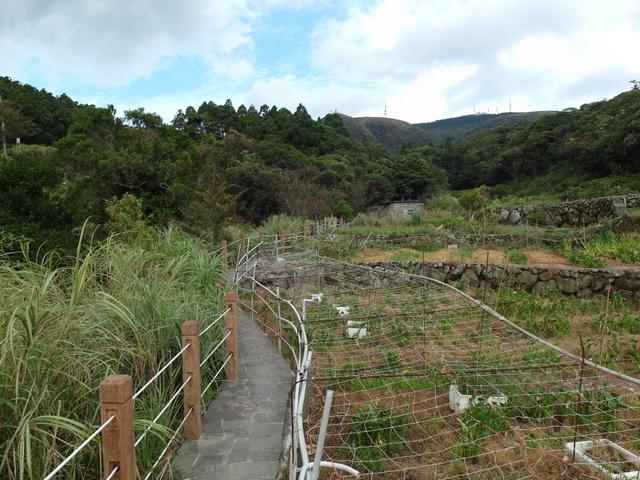 竹子湖步道  (36).JPG