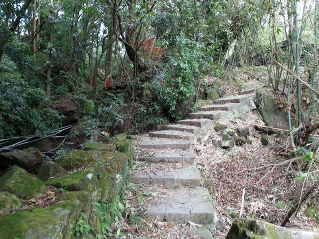 竹子湖步道  (38).JPG