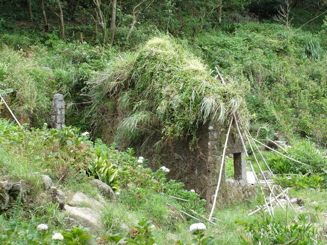 竹子湖步道  (39).JPG