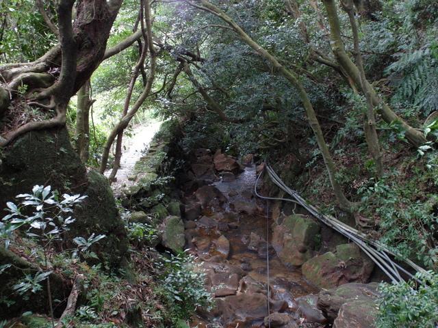 竹子湖步道  (42).JPG