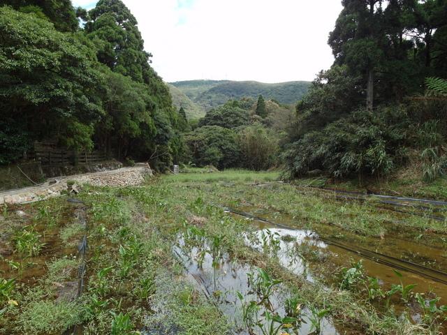 竹子湖步道  (44).JPG