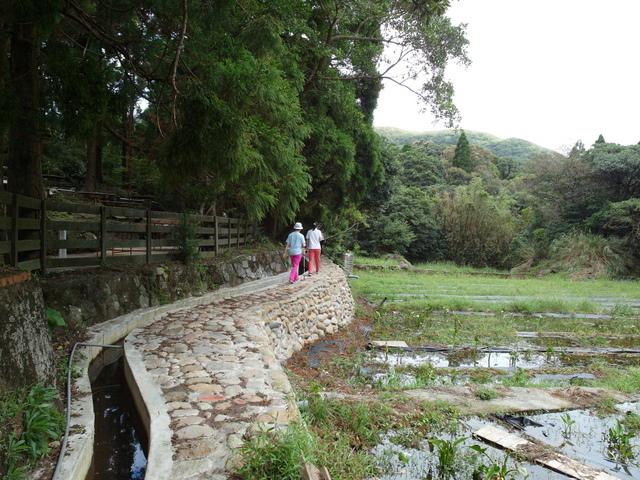 竹子湖步道  (45).JPG