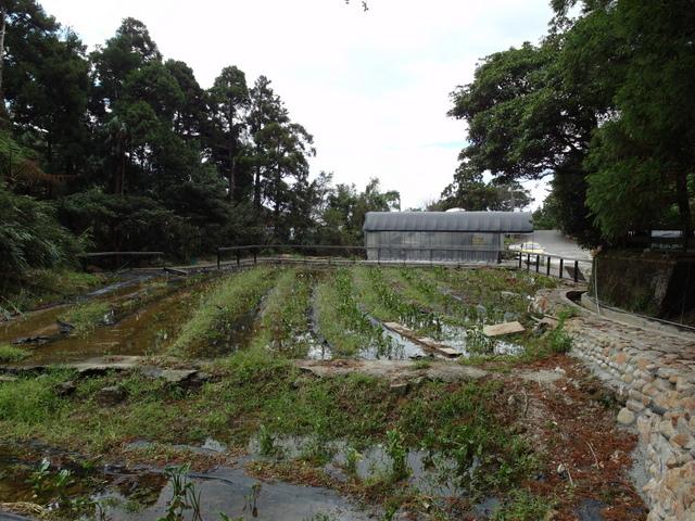 竹子湖步道  (46).JPG