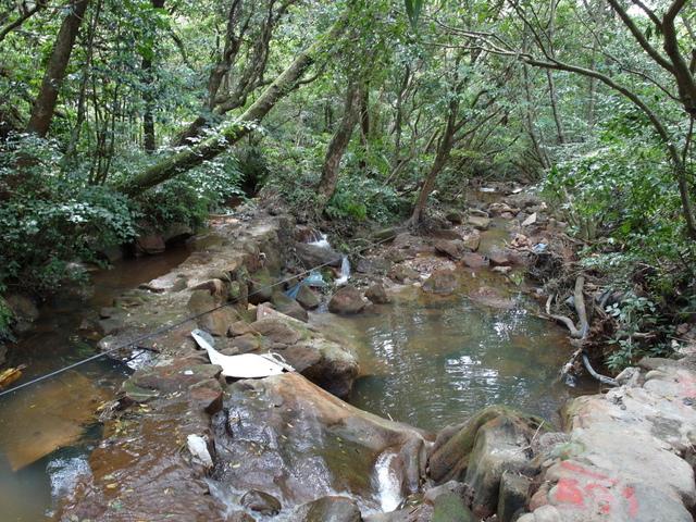 竹子湖步道  (48).JPG