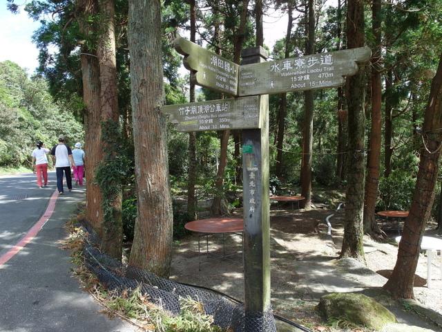 竹子湖步道  (52).JPG
