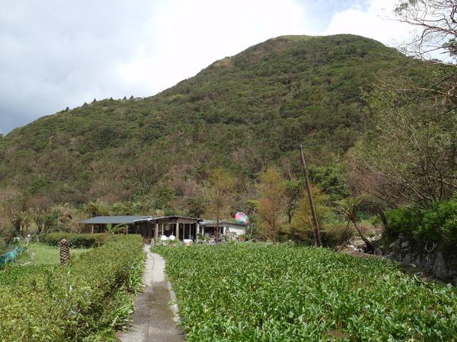竹子湖步道  (72).JPG