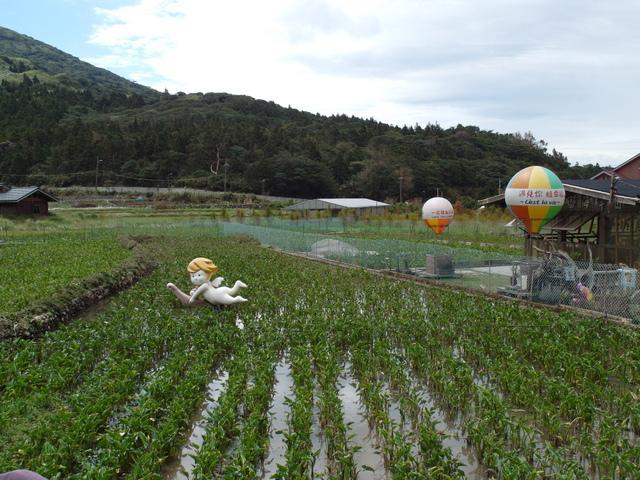 竹子湖步道  (76).JPG