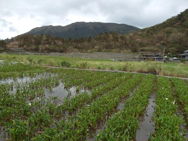 竹子湖步道  (81).JPG