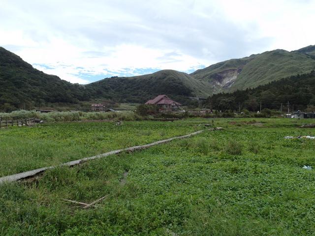 竹子湖步道  (84).JPG