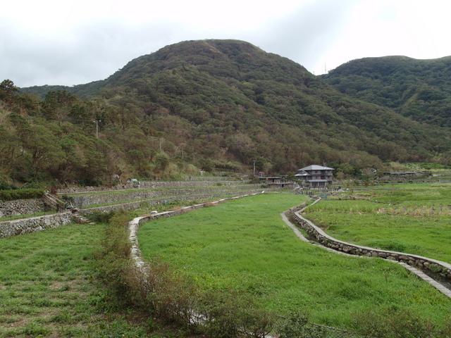 竹子湖步道  (89).JPG