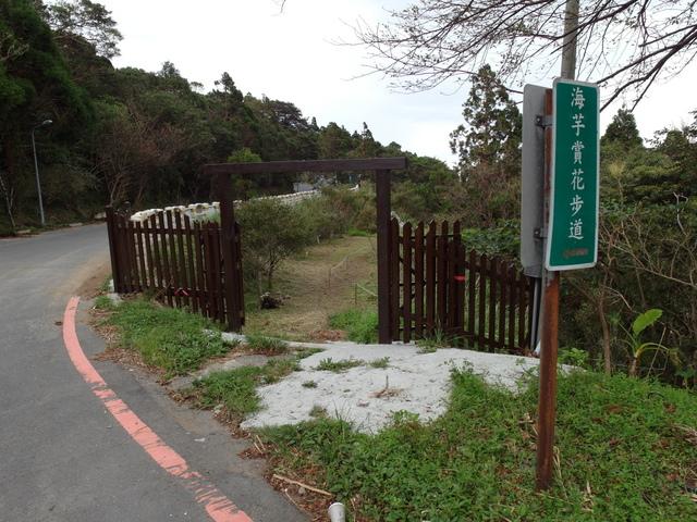 竹子湖步道  (94).JPG